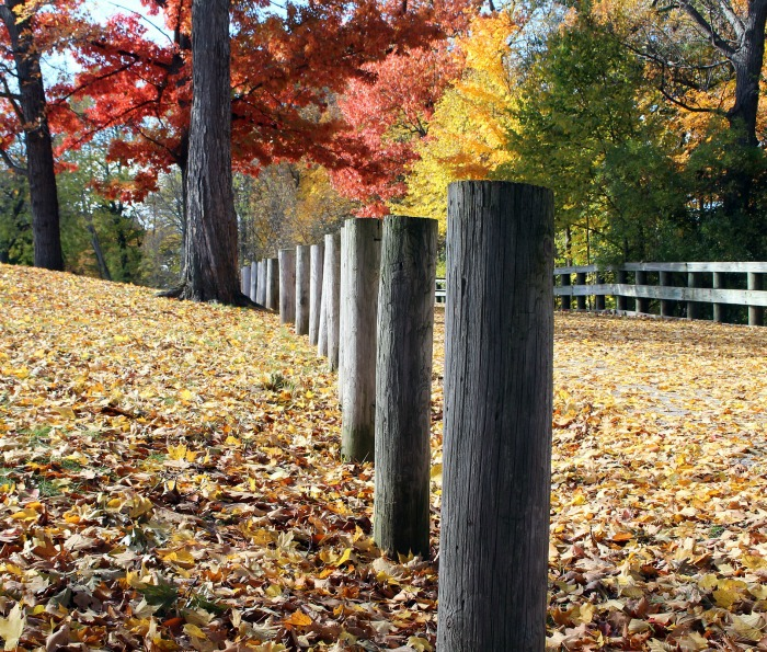Autumn fence posts and fallen leaves