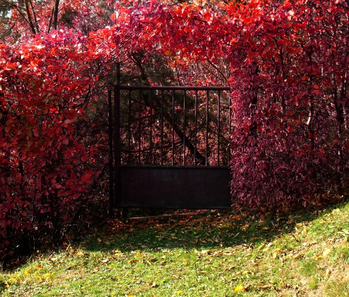 Deep brown metal fence and blood red leaves