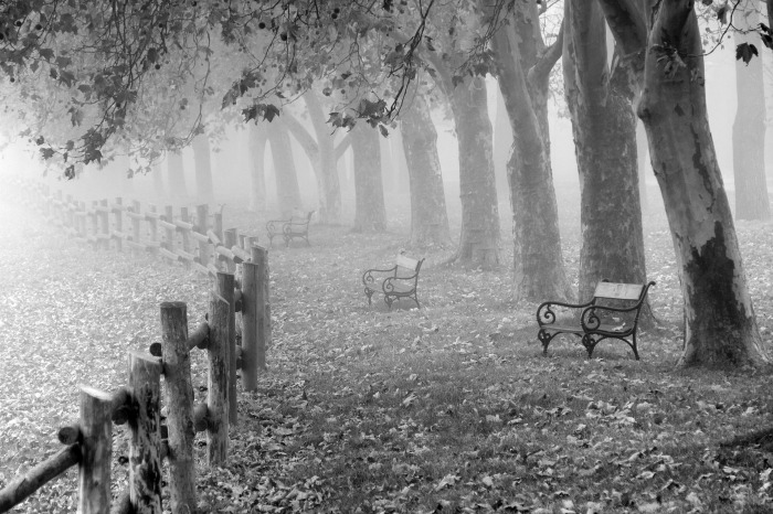 Autumn mist with park benches and fence