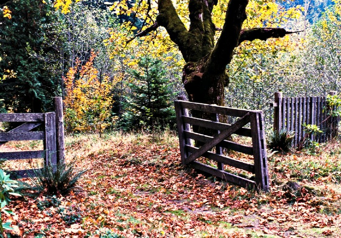 garden fence and gate in fall