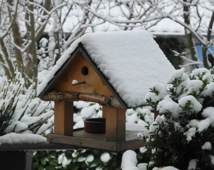 Bird house in snow