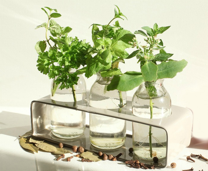 bottles with herbs siting in water and seeds and leaves.