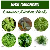 Common kitchen herbs