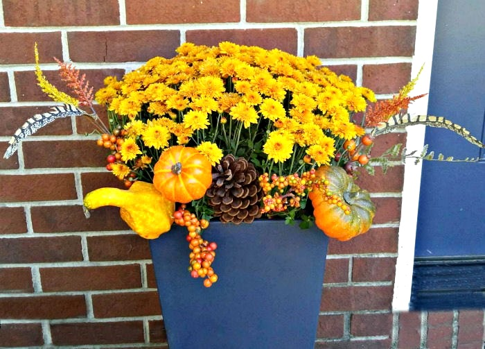 Mums in planters decorated for fall