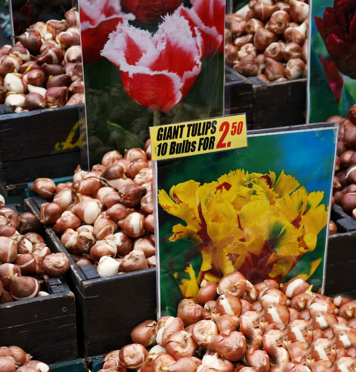Plant spring bulbs in the fall