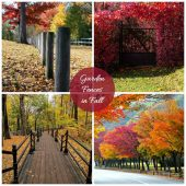 Fall Foliage - Garden Fences and Gates