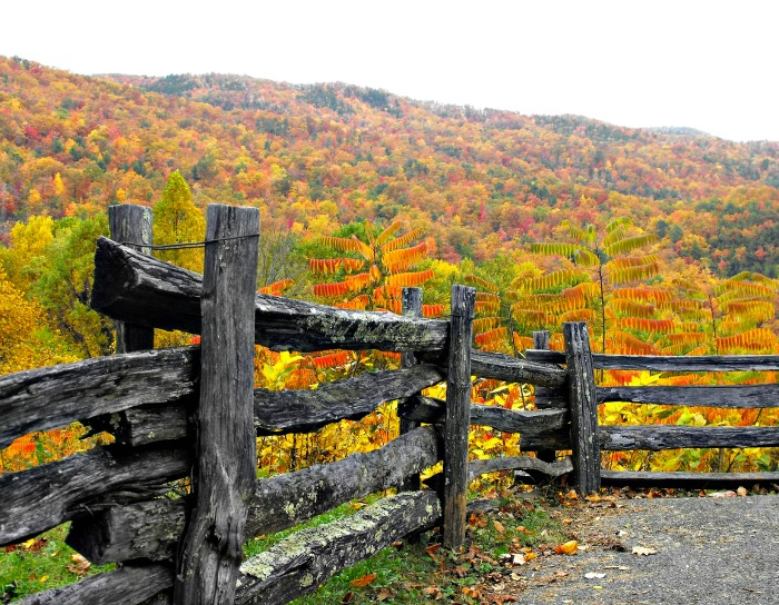 Rustic road side fence in autumn