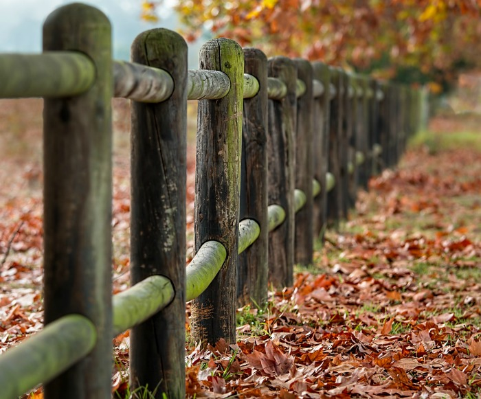 Fence post and fallen leaves