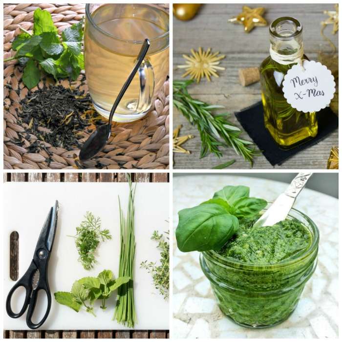 Fresh herbs have a great flavor and can be used in recipes, pesto, and flavored oils.