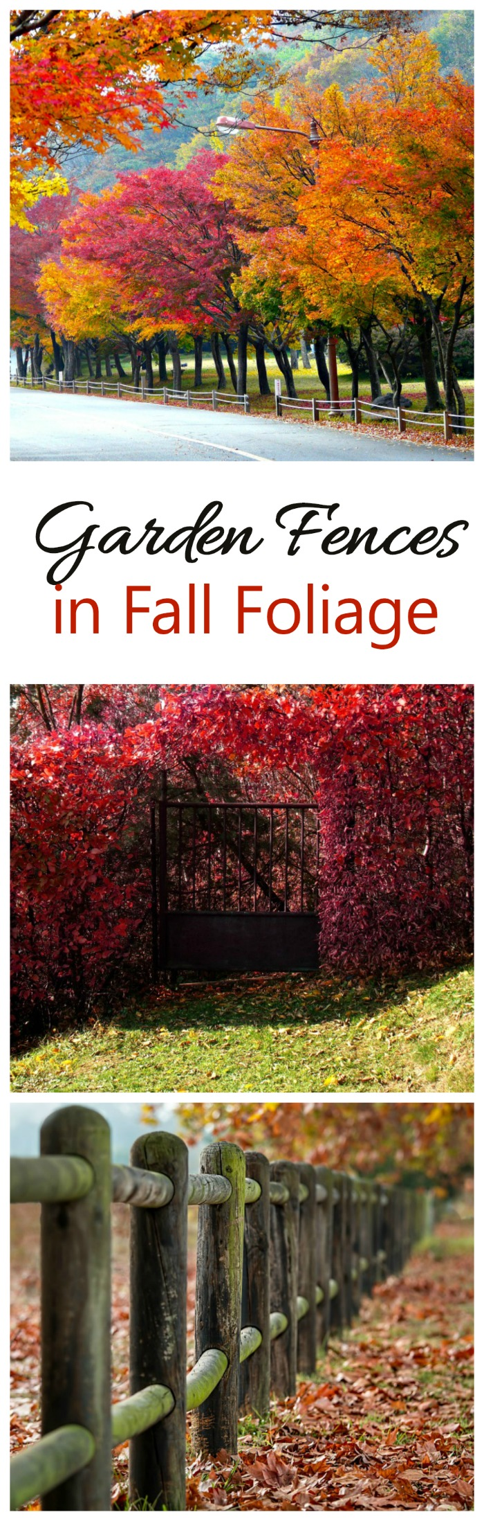 The colors of fall foliage add a backdrop to these garden fences and gates. Mother Nature at her best! #fallfoliage #gardenfences