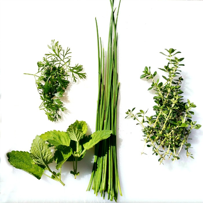 Growing and using fresh herbs