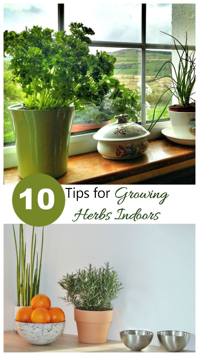 These 10 Tips Will Give You The Flavor Of Fresh Herbs All Year Long. Use