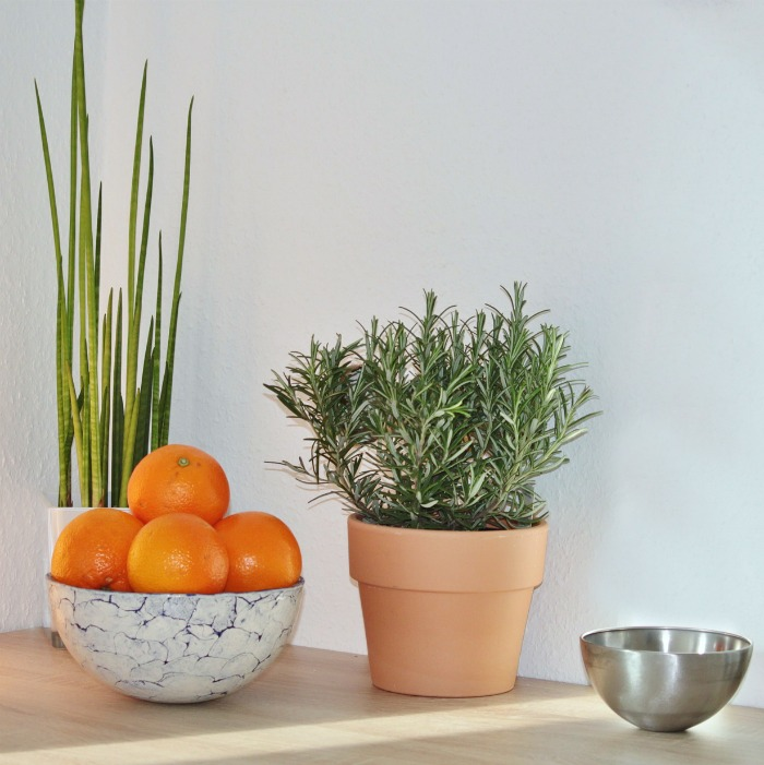 Herbs for indoor gardens