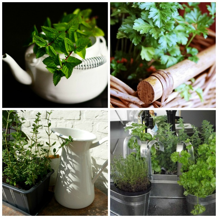 Containers for growing herbs indoors