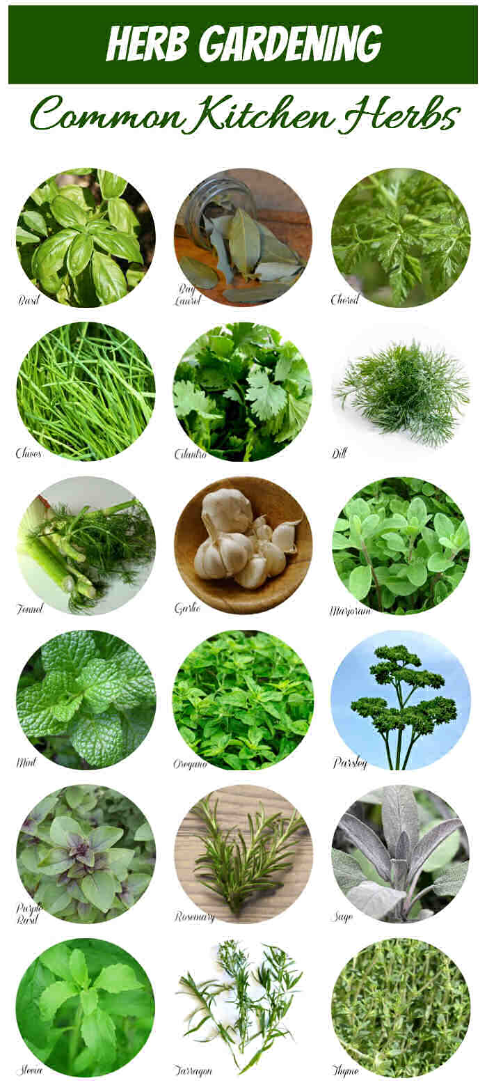 Herb identification chart: Pictures of herbs in circles with the words Herb Gardening, common kitchen herbs..