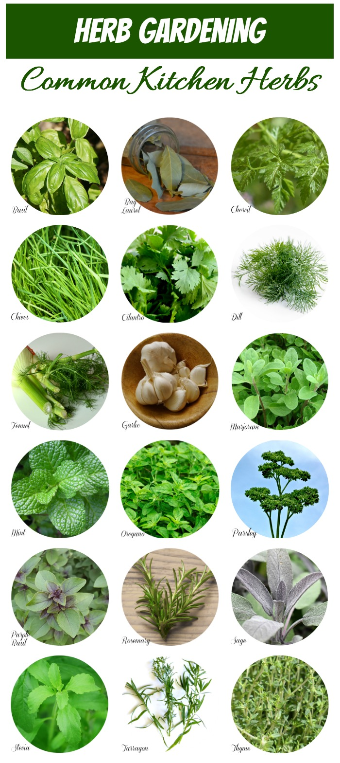This handy chart makes Herb Identification a snap. #herbidentification #kitchenherbs