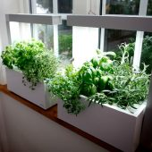 Best herbs for growing indoors