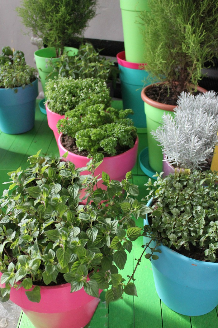Herbs can be grown indoors in lots of pretty containers. Click to see my guide to growing and using fresh herbs.