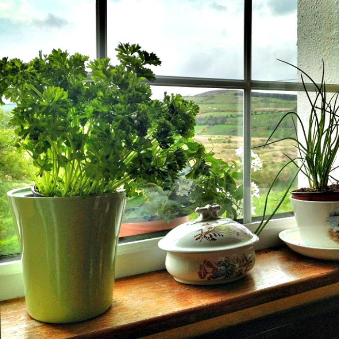 A sunny windowsill is a must for growing herbs indoors