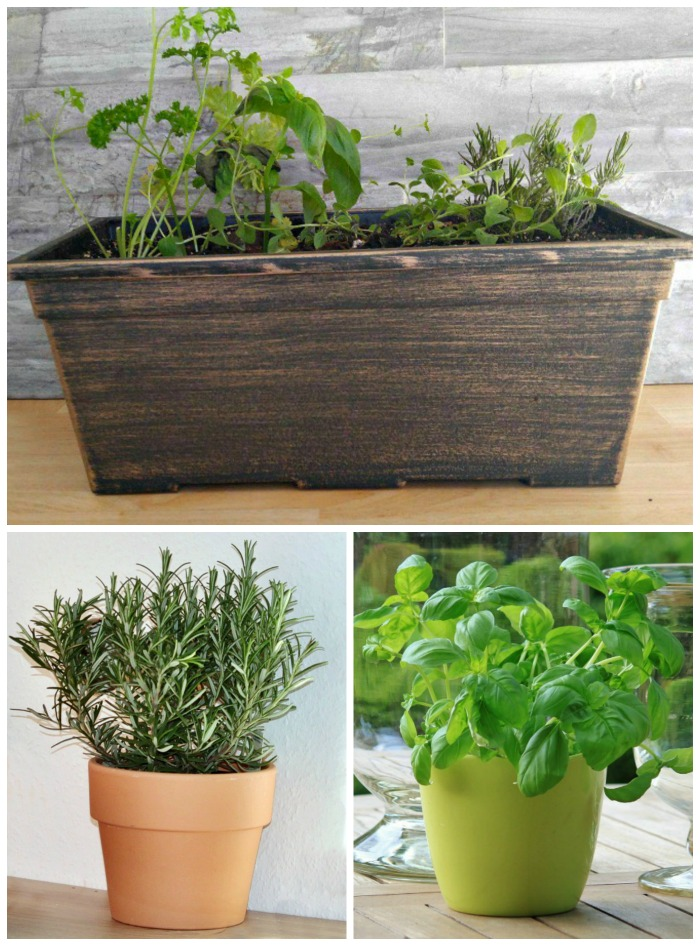 Herbs can be grown indoors in the winter months