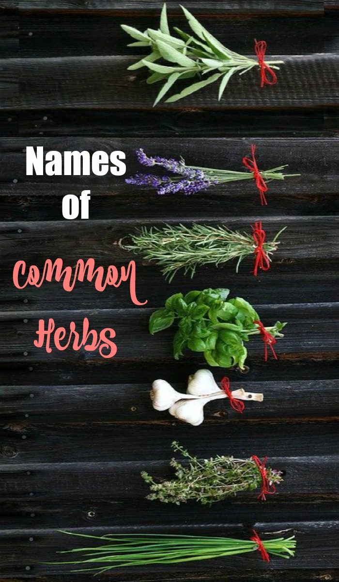 Names of common culinary herbs - herb identification