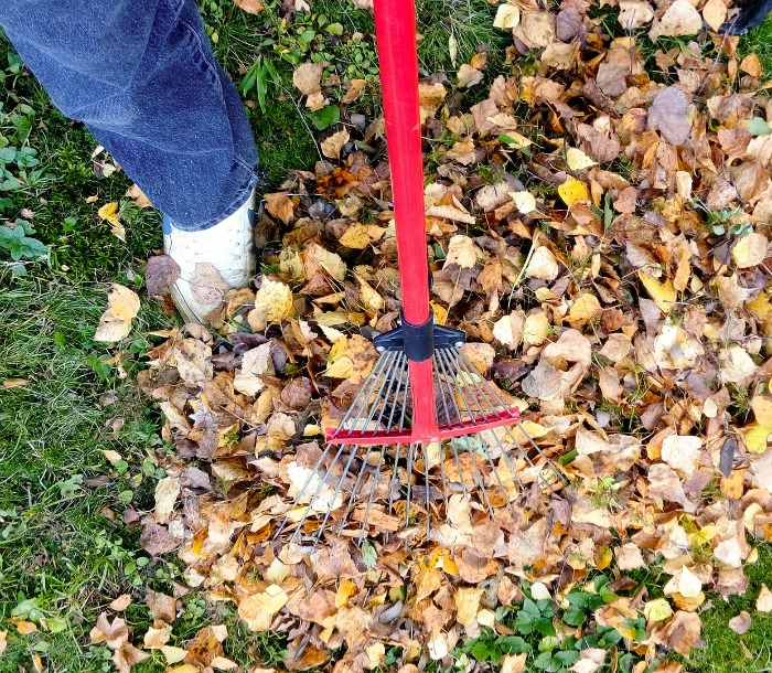 Rake leaves and store for leaf mold