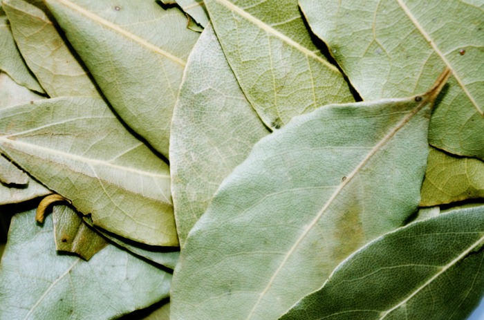 Bay Leaf Plants How To Grow And Care For Bay Laurel