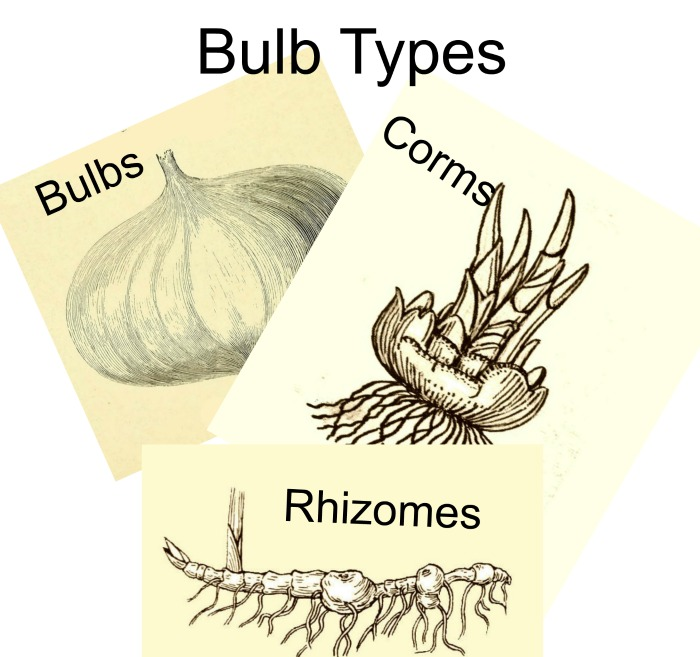 Know your bulb types