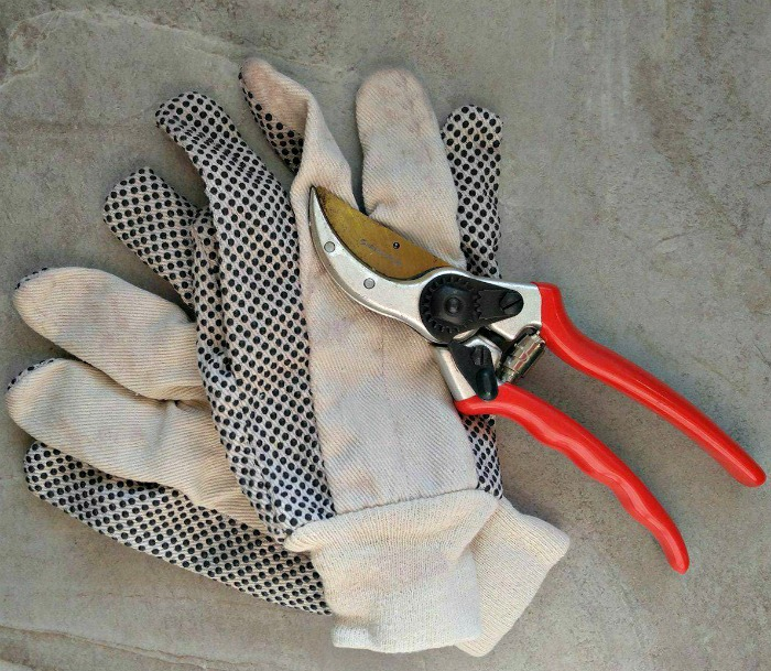 Garden gloves and pruning shears