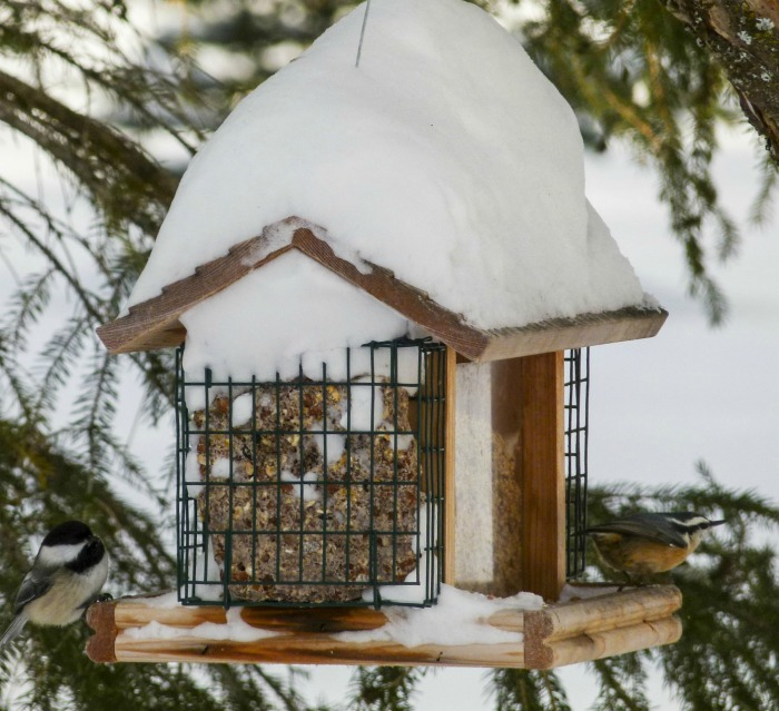 Keep bird houses clean to attract birds in winter