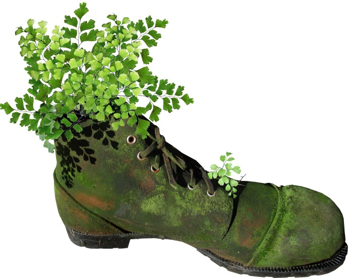 Boot planter with maidenhair fern