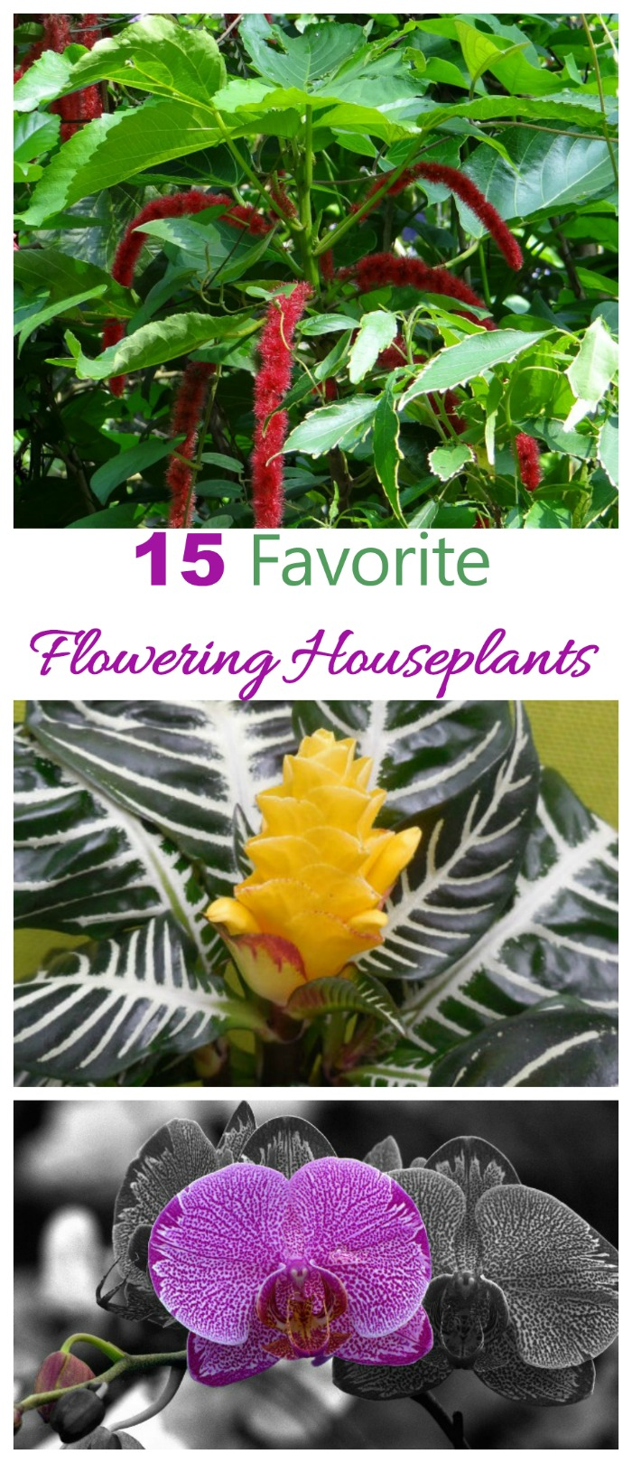 These 15 flowering houseplants will bring the color and warmth of the garden indoors #floweringhouseplants #bloomingindoorplants