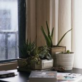 Caring for indoor plants in the winter