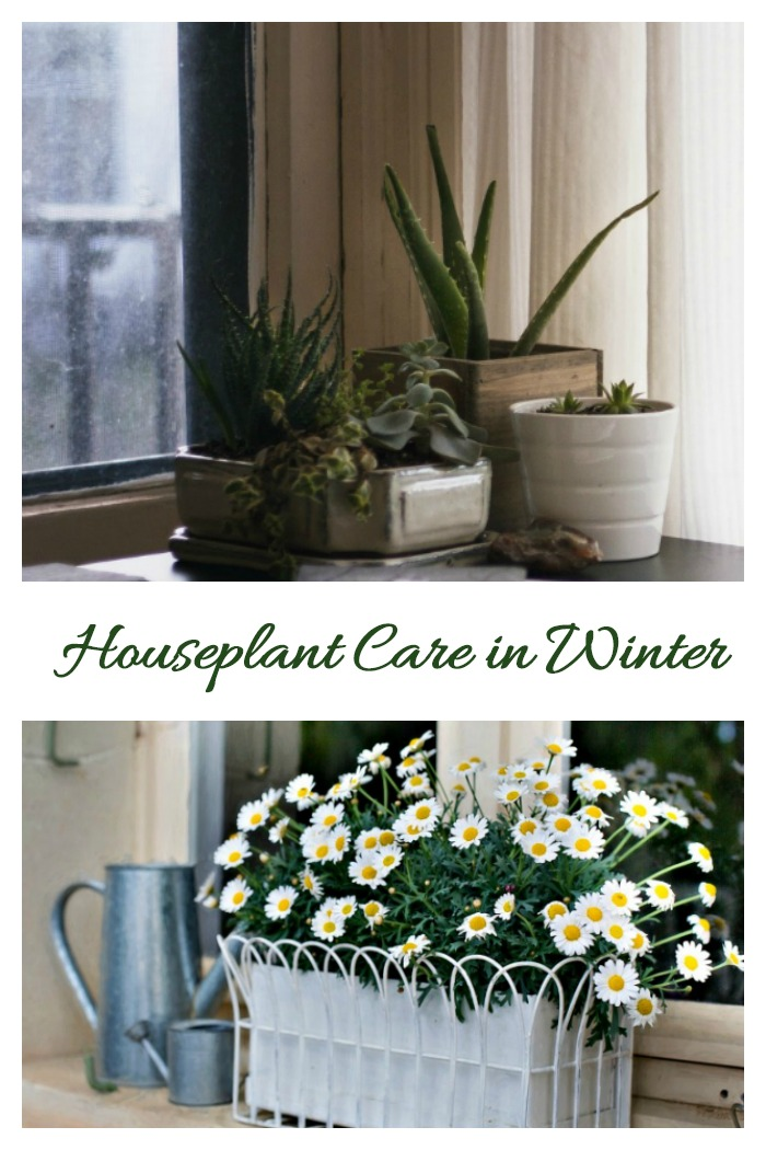 Follow these tips fow houseplant care in the winter.