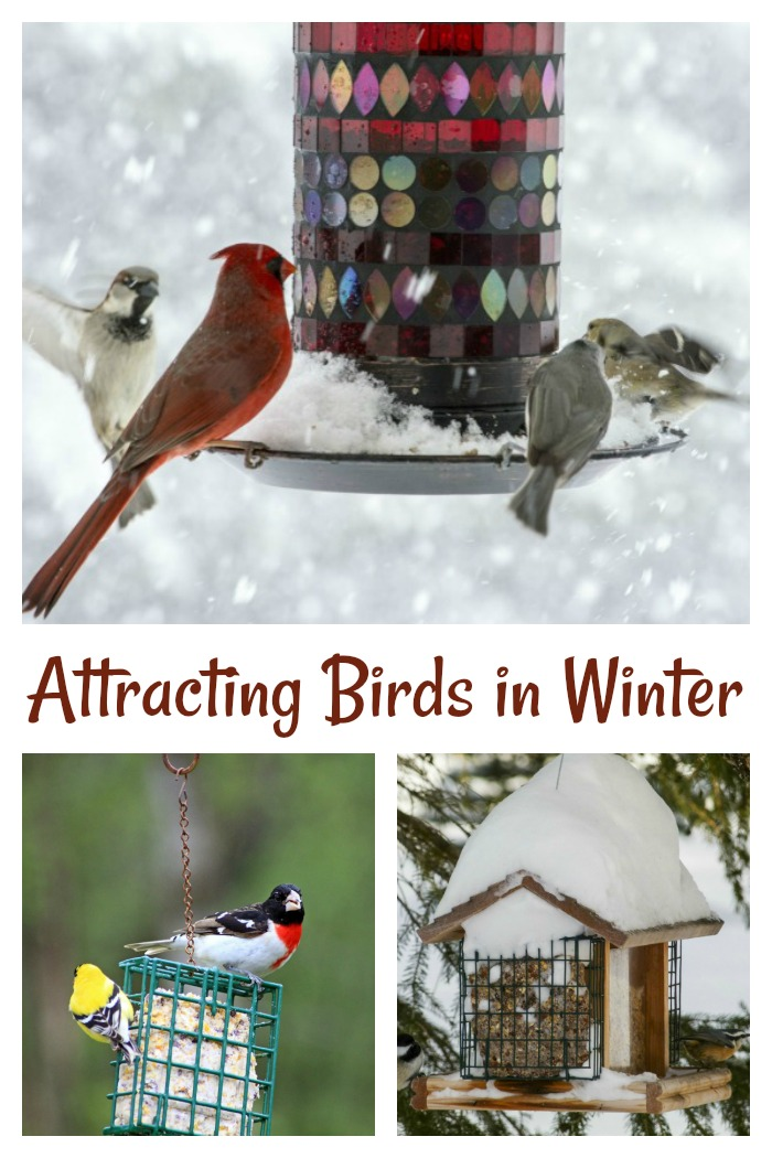 Tips for Attracting Birds in Winter. See how you can have birds all year long in your yard.