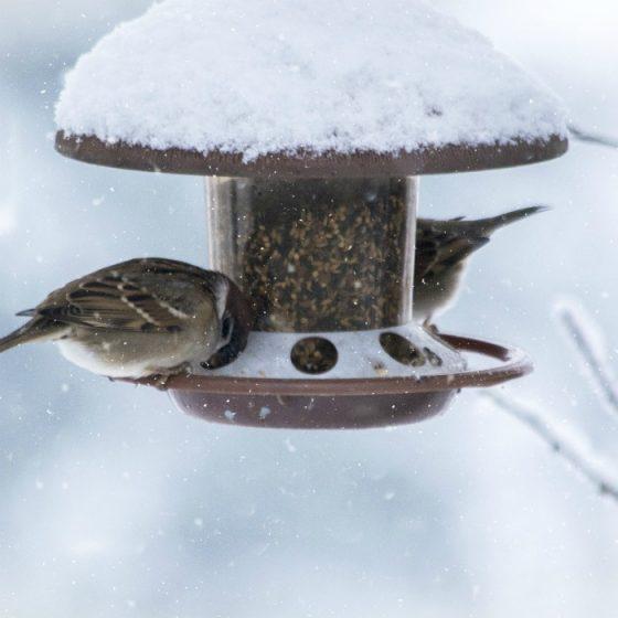 Feeding Tips for Birds