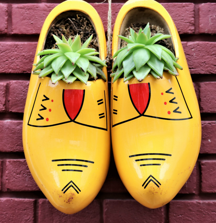 Wooden shoes with succulents