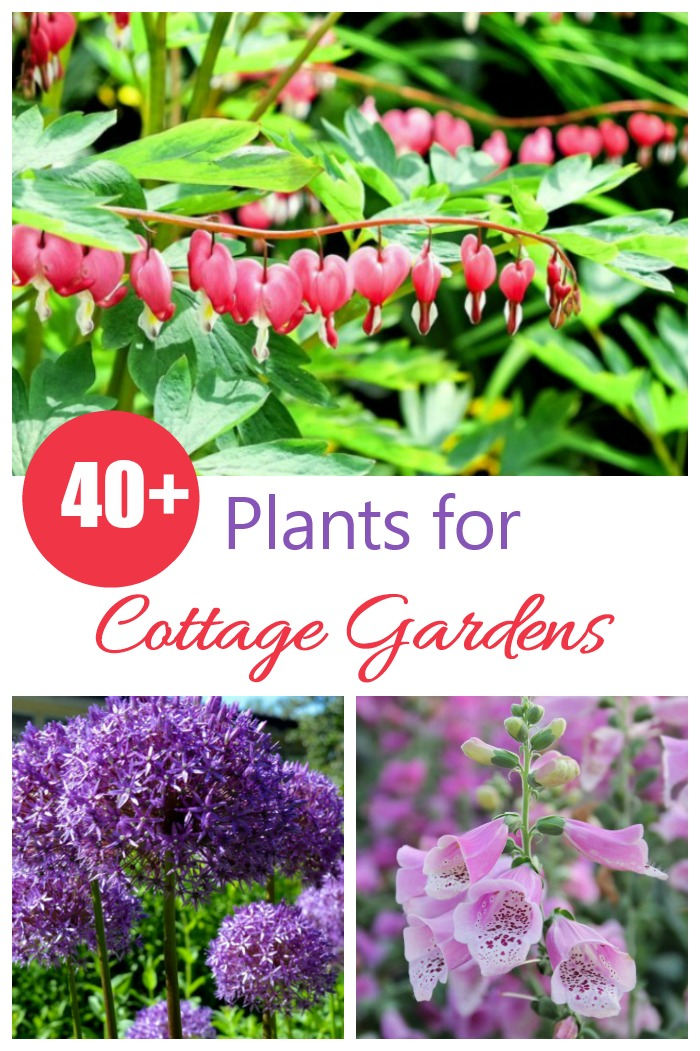 These 40 plants for cottage gardens will add a soft and romantic touch to any garden setting.