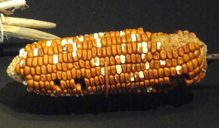Irregular corn kernels