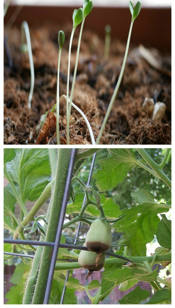 Problems in the vegetable garden