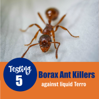 Ant and ant killer test text overlay