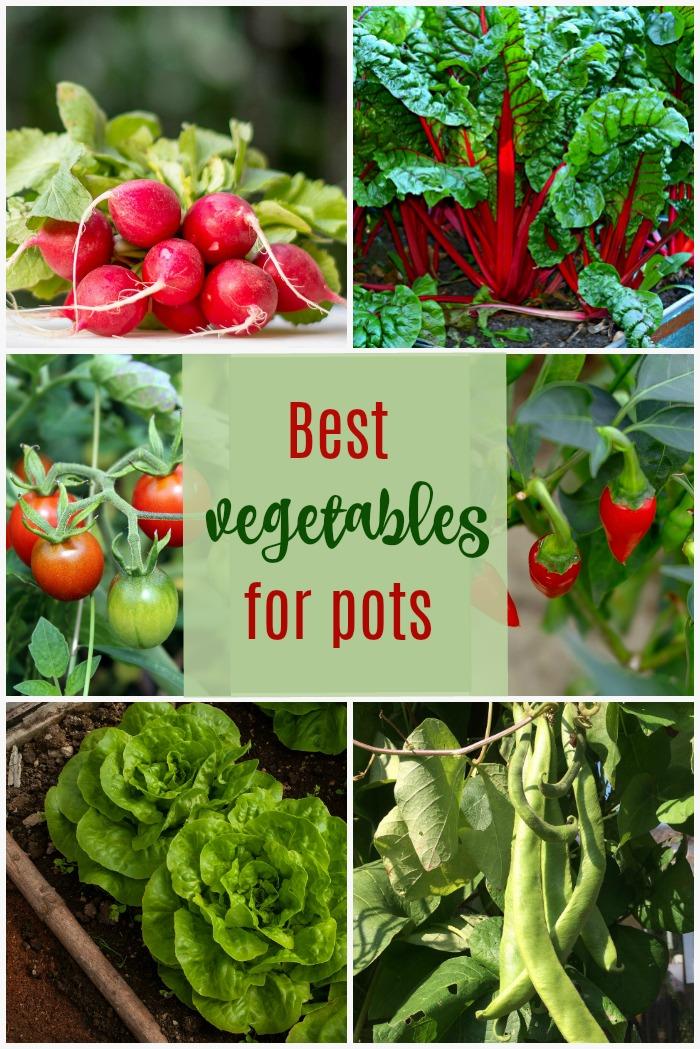 Vest vegetables to grow in pots