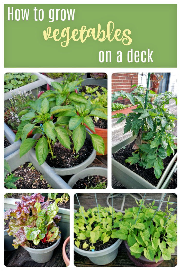 Tips for growing vegetables on a deck garden