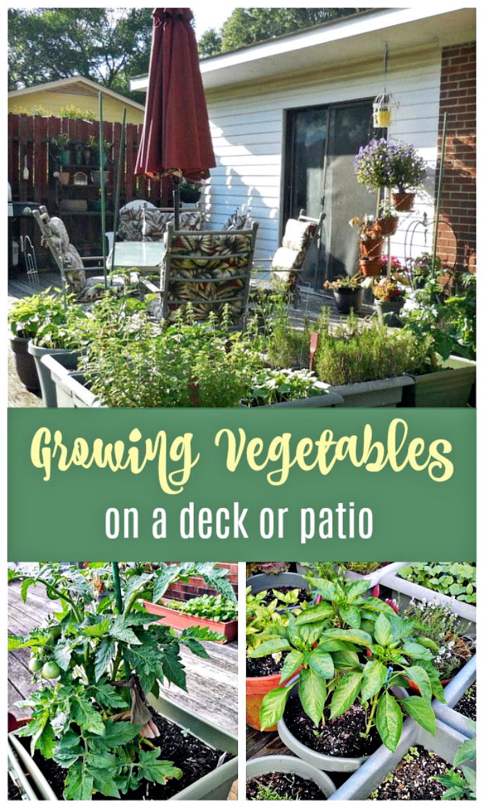 Growing vegetables on a deck or patio
