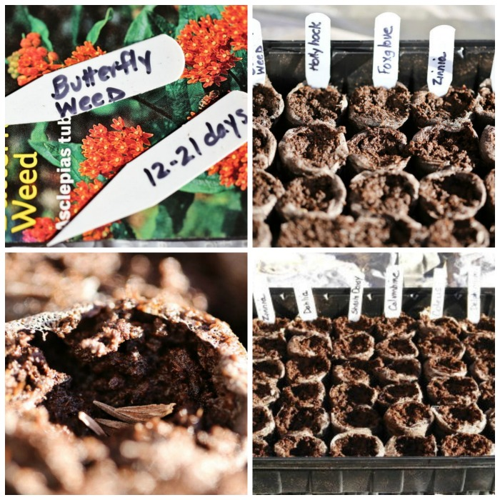 Planting seeds in pellets and marking them.
