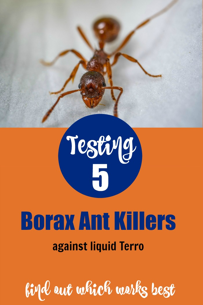 Testing Borax Ant Killers against Terro