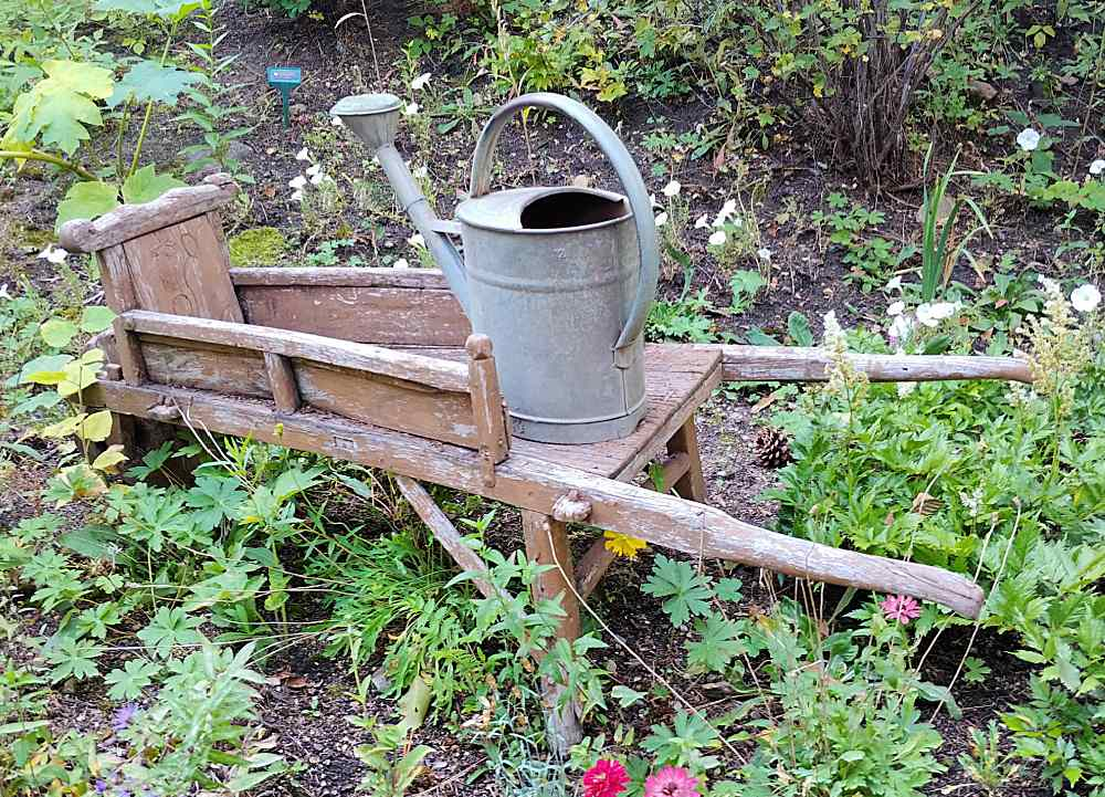 Old wheelbarrow with watering can.