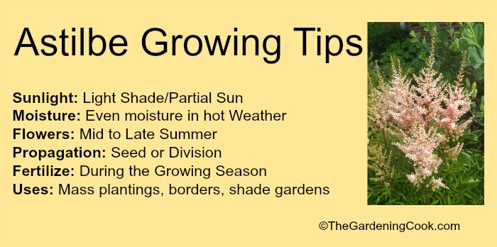 Print out the growing tips for astilbe