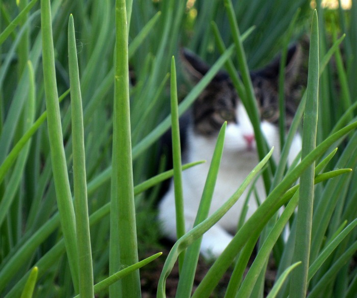 cat hiding in garden