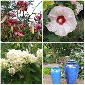 Virginia Tech Horticulture Garden